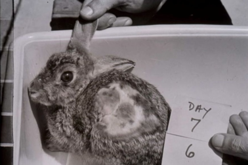 A rabbit in a box, with a note saying Day 7, 6 beside it.