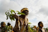 Dancers wearing body paint and yellow headband dance while holding eucalyptus leaves.