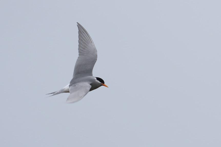 A bird captured flying through the air
