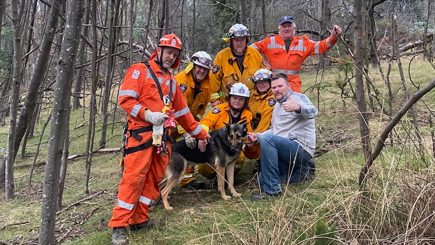 A team of rescuers surround a German shepherd dog.