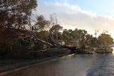 Tree down in Broken Hill hail storm