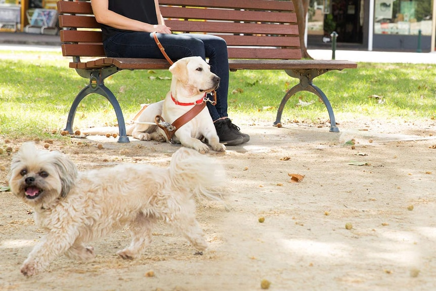 A woman sits with a dog and another dog is nearby