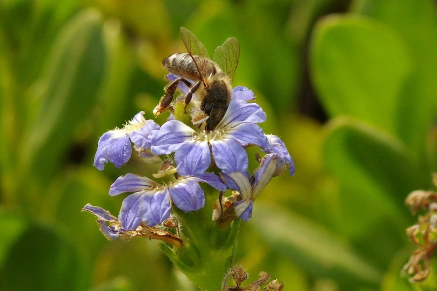 A bee hovers over a flower, collecting pollen.