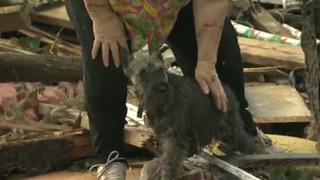 CUSTOM Oklahoma tornado dog