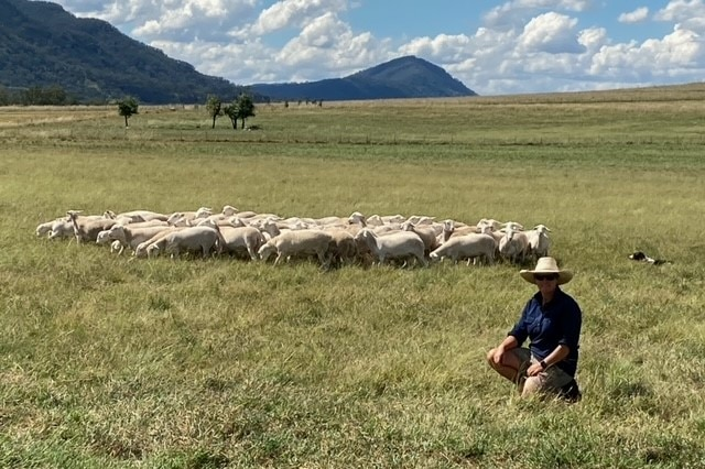 A woman in a blue shirt kneels in front of a flock of sheep.