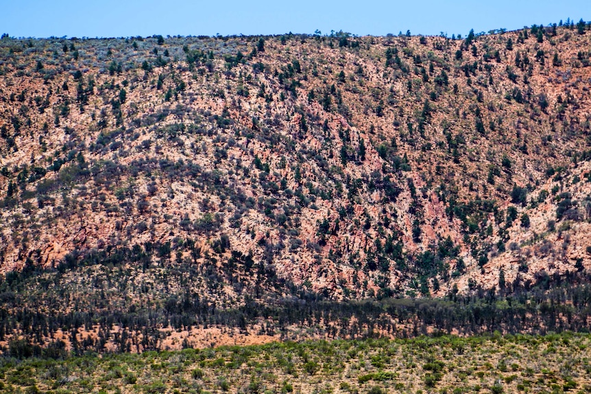 Trees across a red landscape in the Flinders Ranges