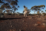 A prospector uses a metal detector to look for gold in the WA Goldfields.