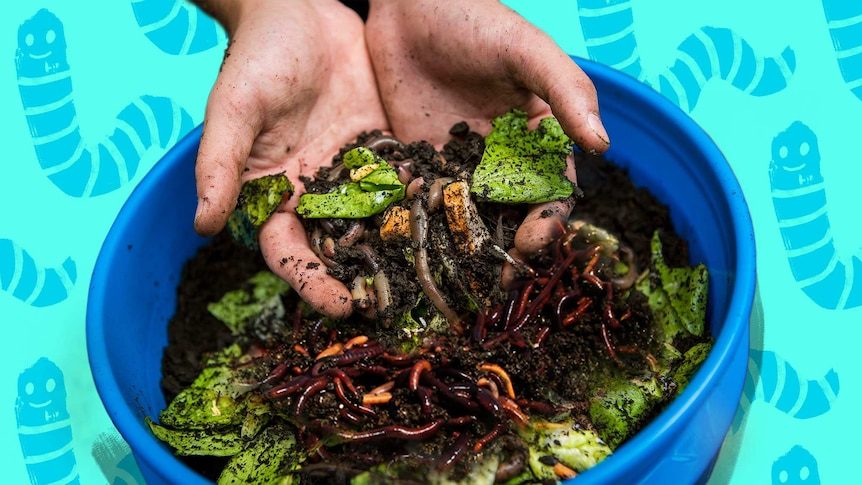 Hands holding worms, dirt and food scraps for a guide on how to build a worm farm.