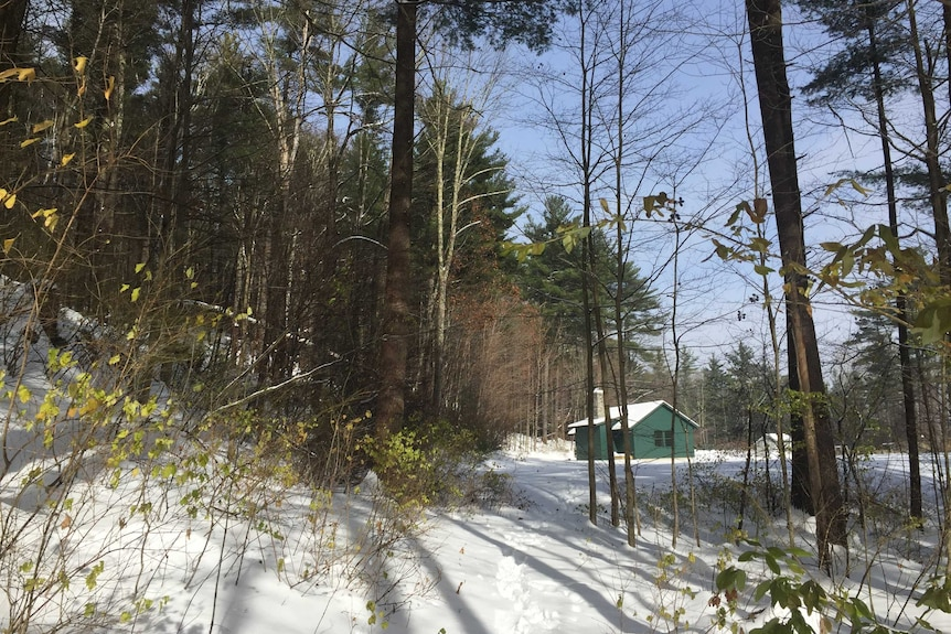 Green cabin surrounded by snow in the woods.