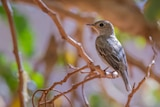 A small brown bird sitting on a branch.