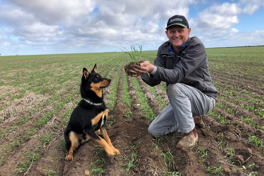 A farmer smiling with his dog in a newly germinated wheat field