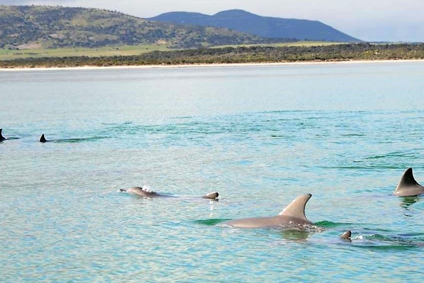 Landscape picture of hill in back ground pod of dolphins in foreground