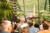 A Titan Arum 'corpse flower' in full bloom attracting lots of tourists.