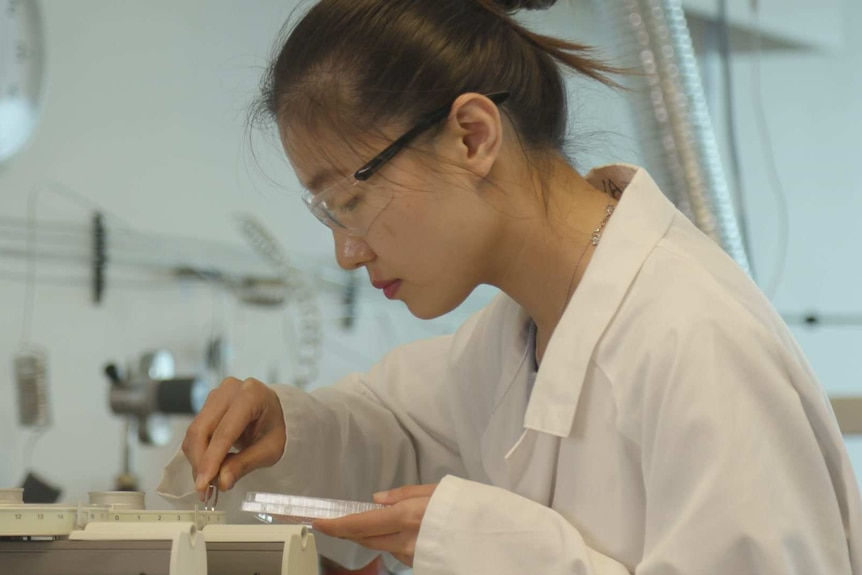 Xiaoteng Zhou testing honey