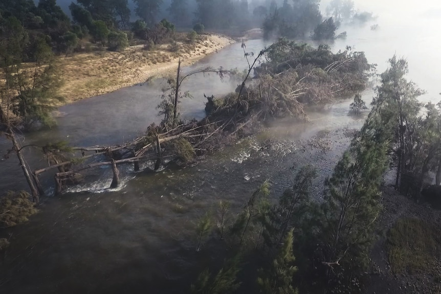 an aerial picture trees damaged by flooding