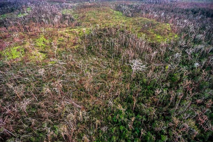 Aerial view of fallen trees throughout Iron Range National Park savannah.