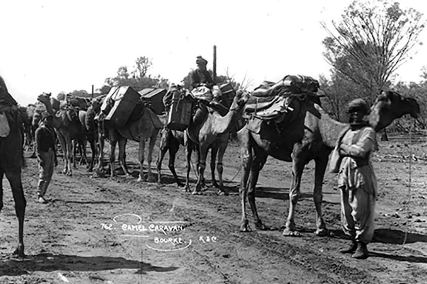 Camels carrying heavy loads in a line
