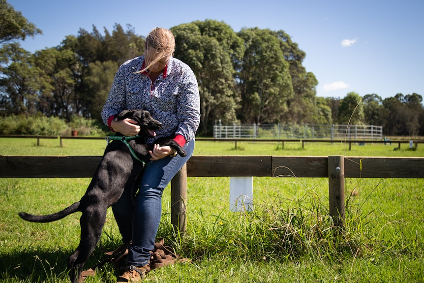 A black dog stands on its hind legs to receive a pat from a woman sitting on a fence in a paddock.