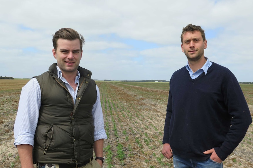 Victorian growers Simon Allan and James Hood pictured in the middle of Simon's hemp crop.