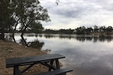 Rising Murray River at Mildura Apex Beach