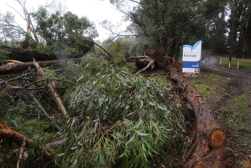 A fallen large tree near the sign that says Welcome to Emerald