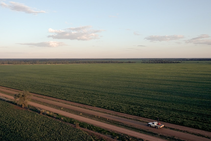 Aerial photo of a wheat crop at Coorangy, near Goondiwindi, Queensland, August 2021.