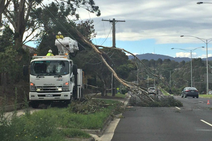 Tree on power lines after wild weather in Victoria