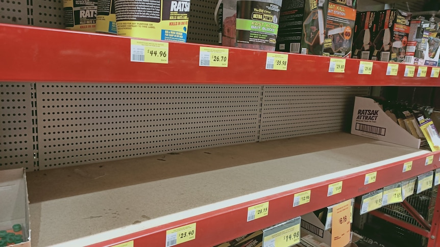 An empty shelf where mouse traps once were