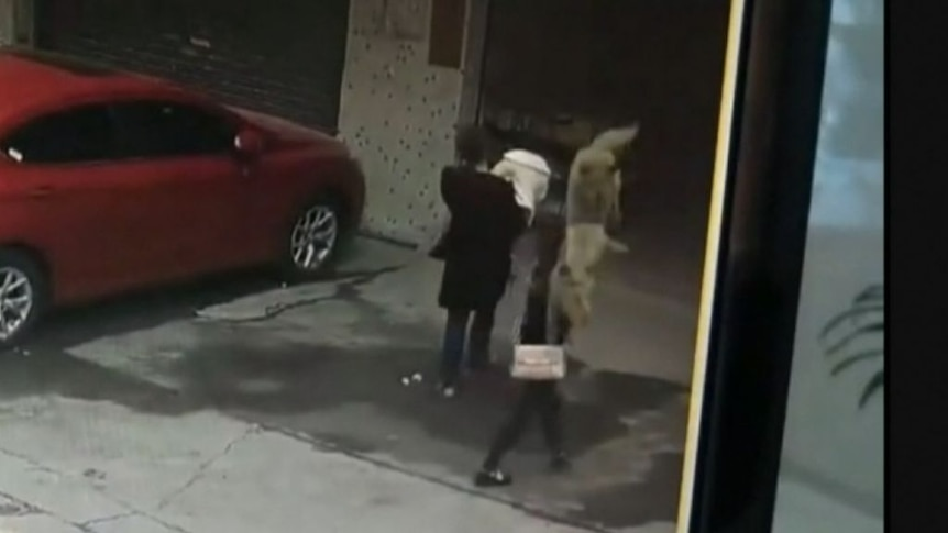 CCTV shows dog falling onto woman, knocking her unconscious