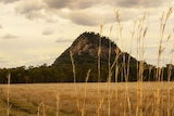 Mountain in the distance with grass in the front of photo.