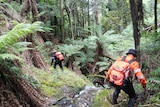 Two people in orange uniforms walk among ferns and trees.