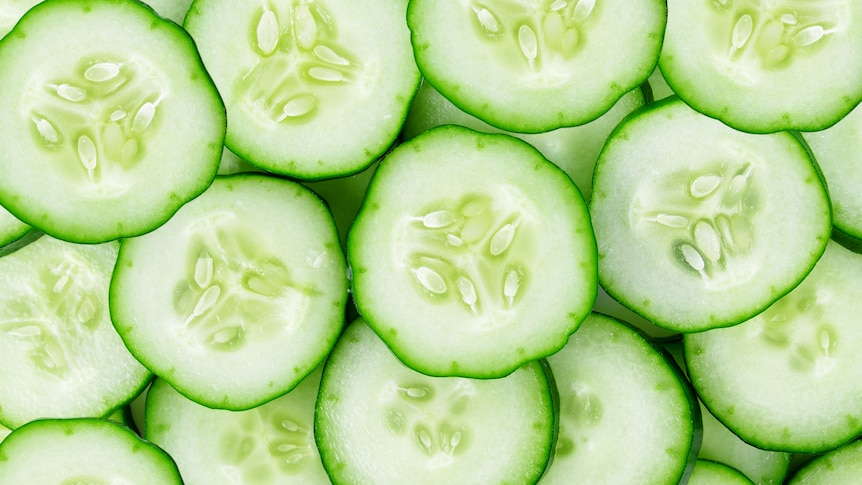 Slices of cucumber, the slicing variety that are commonly eaten raw in salads and as snacks.