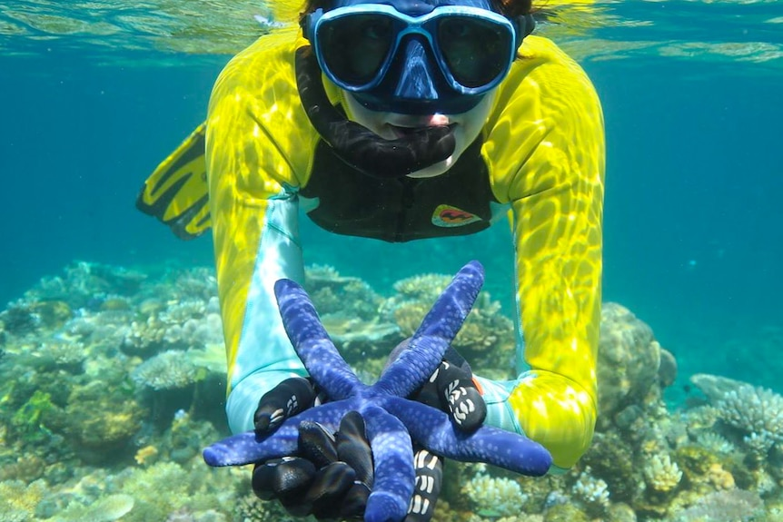 Dr Suzie Starfish holds a blue starfish in the ocean.