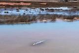Crocodile in Broome