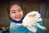 Volunteer worker Jia Tingting holding a small, white rescue dog at a dog shelter on the outskirts of Beijing
