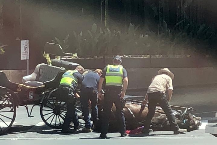 A horse attached to a carriage is seen collapsed in Melbourne's CBD.