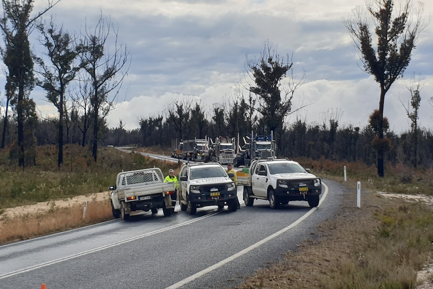 Cars and logging trucks on the road.
