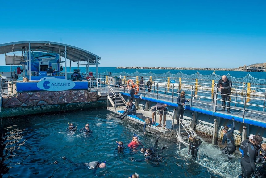 A marine park in which a crowd of people are in water or standing near water, wearing wetsuits and snorkles.