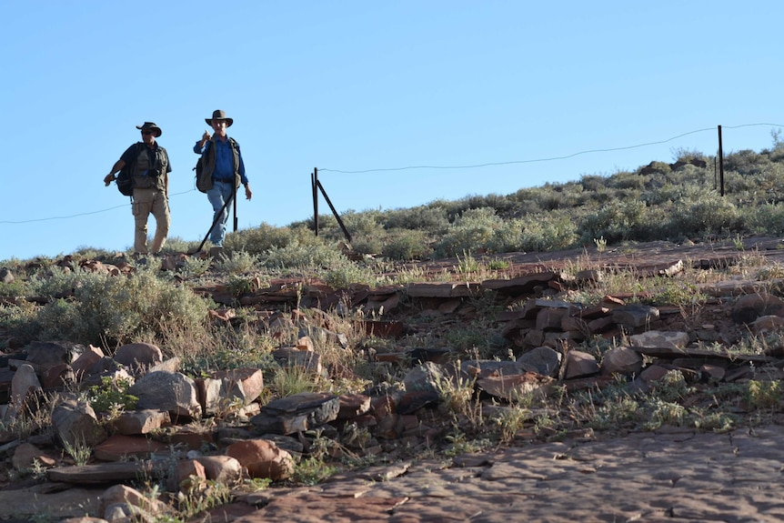 Palaeontologists walking in the Flinders Ranges.