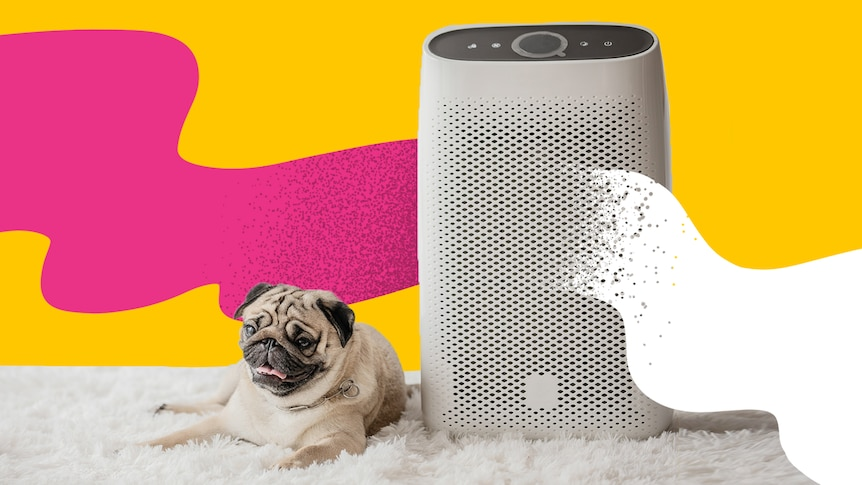 A smiling pug is seen sitting to left of an air purifier against a yellow backdrop with wobbly pink line left and white right