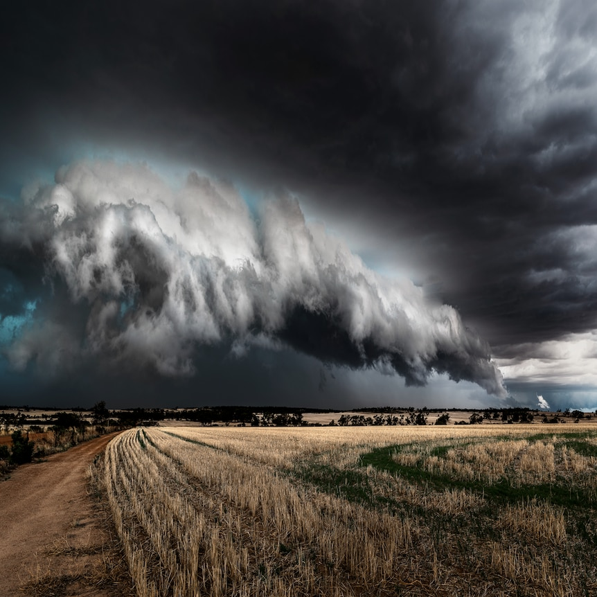 Storm clouds gather over stubble.