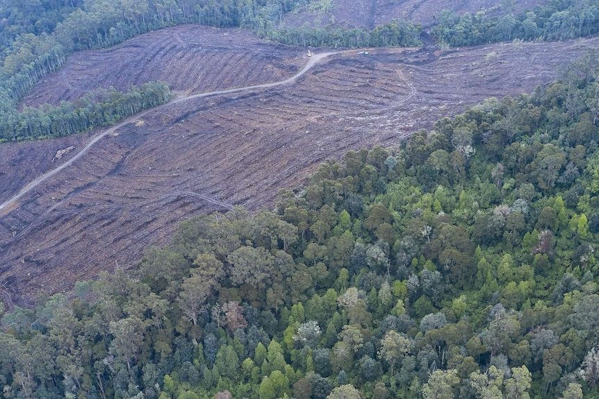 Aerial view of logging at Mutual Valley.