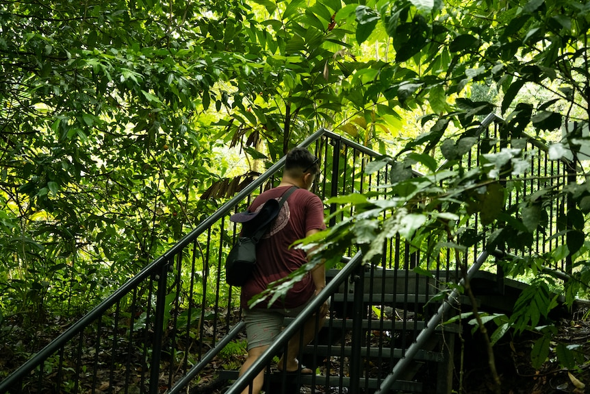 A man walks up the stairs in a lush rainforest