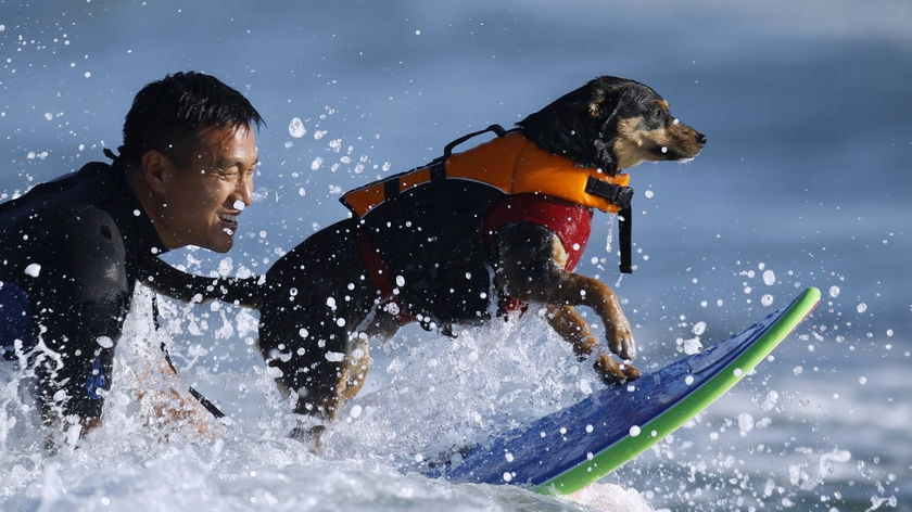 From 'traumatised mess' into a loving pet and champion surfer: Michael Uy and his Australian kelpie Abbie