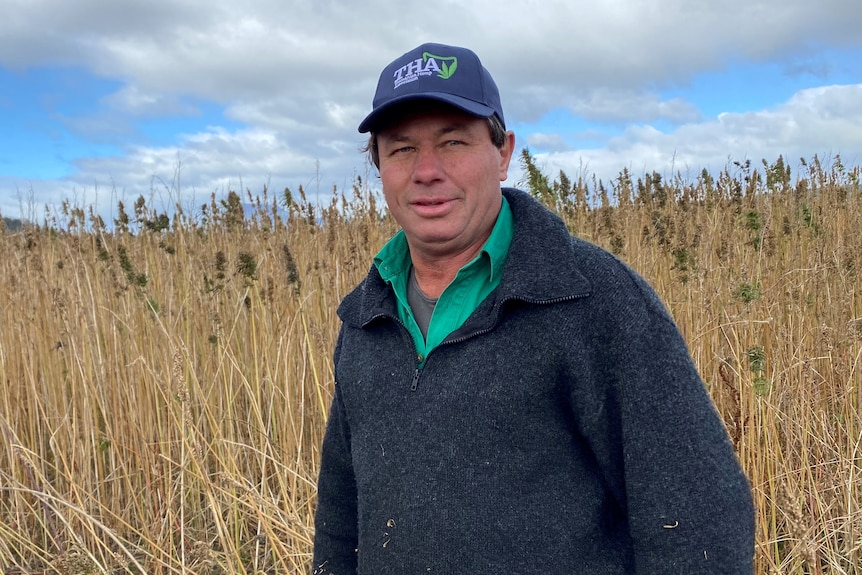 Hemp grower Tim Schmidt in a field.