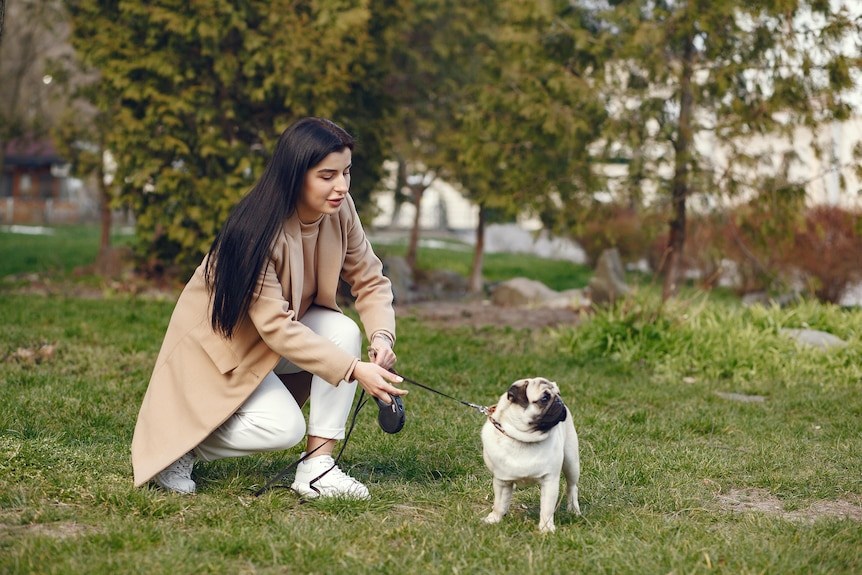 Pug on a lead with its owner kneeling down