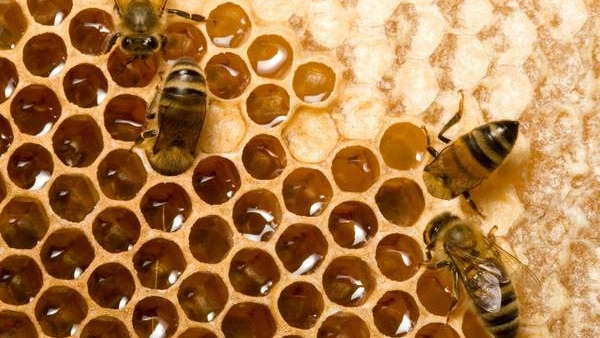 Bees on a hive.