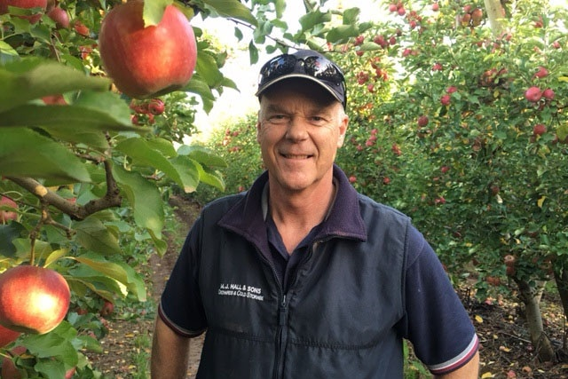 Fruit grower Peter Hall standing near trees.