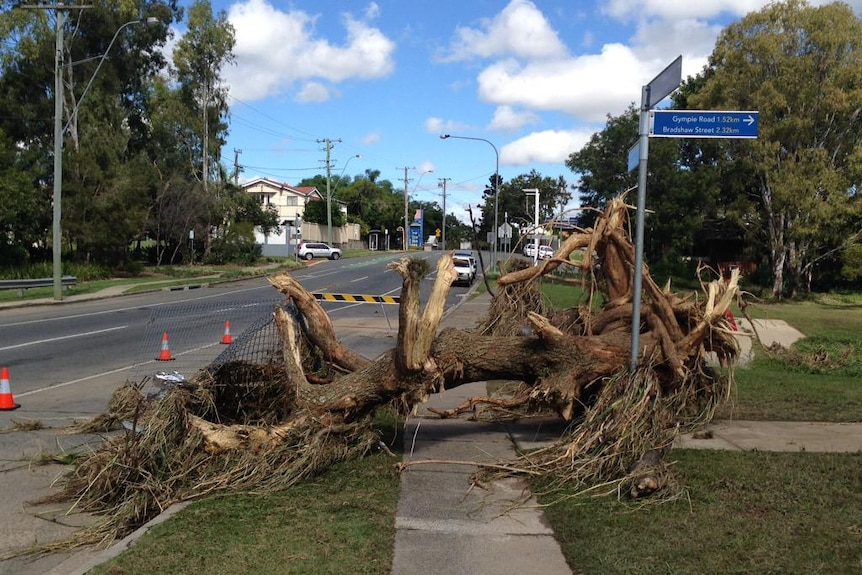Wooloowin clean up