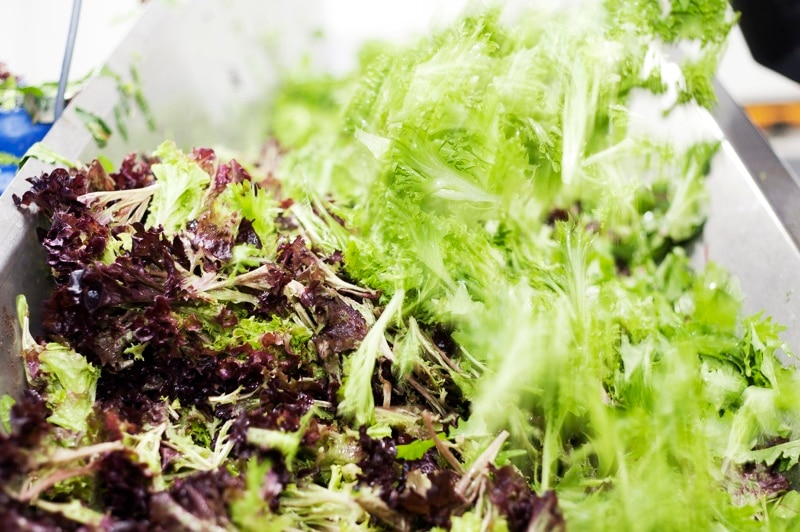 Green and red-tipped lettuce in a bowl